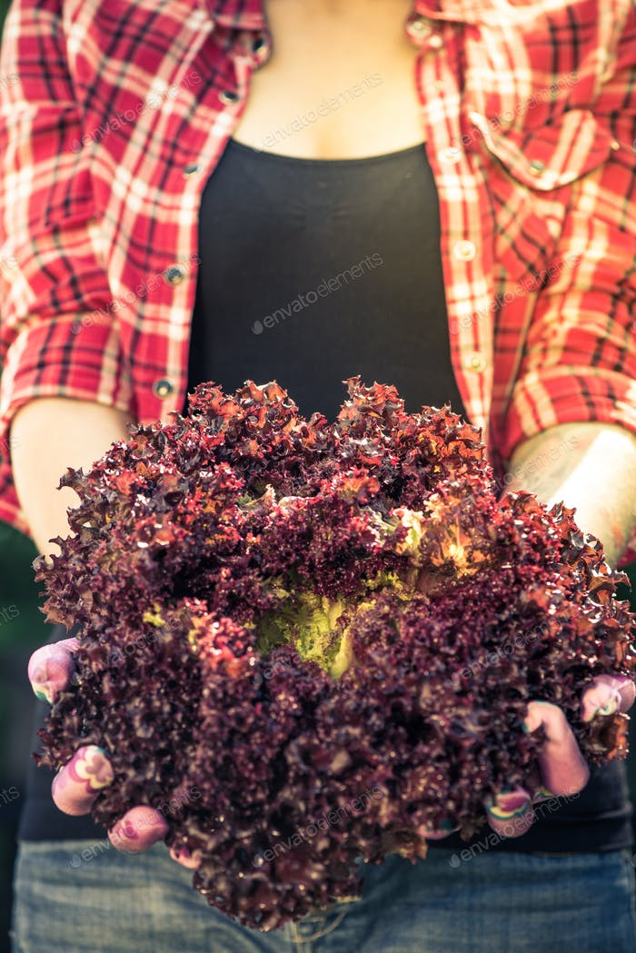 Young woman holding red lettuce in garden
