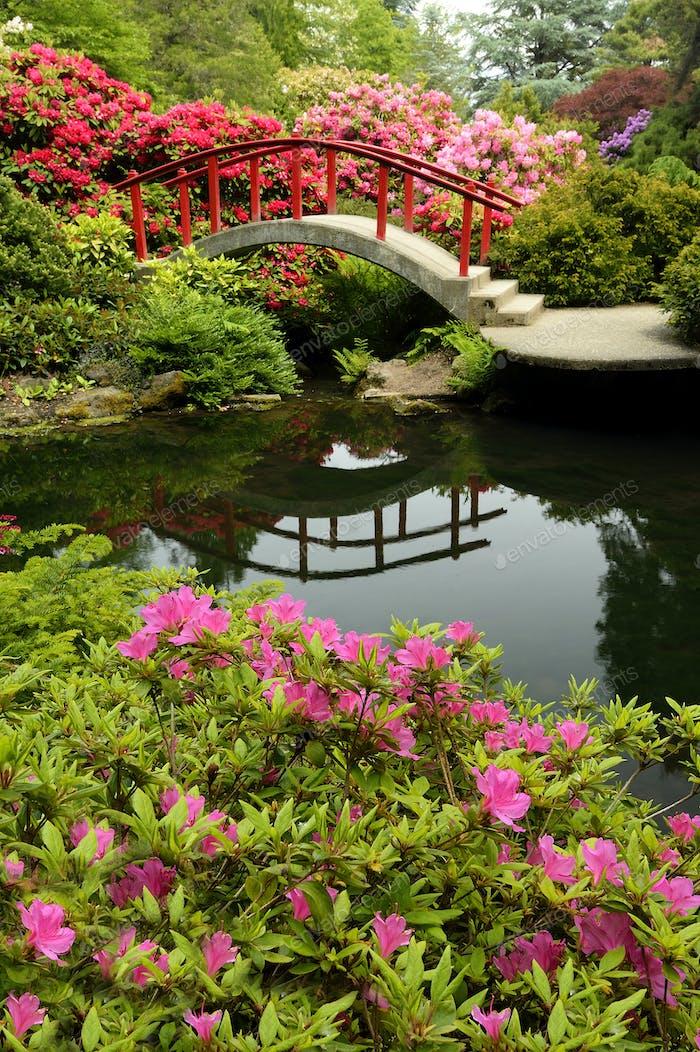 Footbridge and lush plants in park