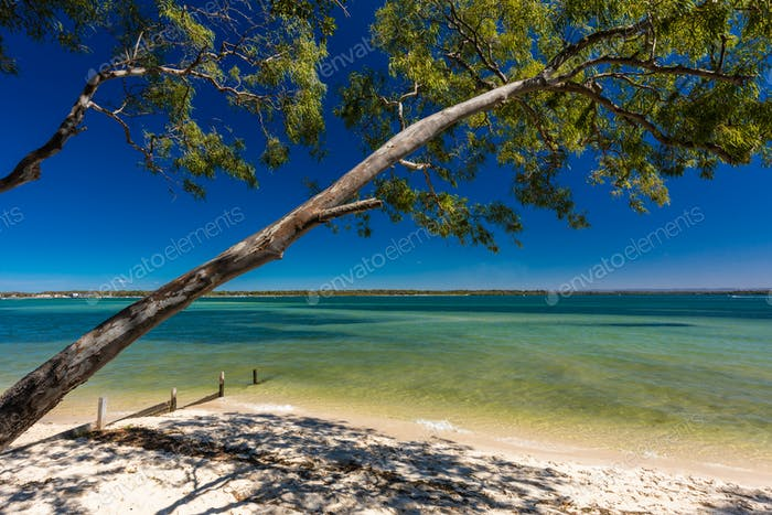 Beach with trees on the west side of Bribie Island, Queensland,