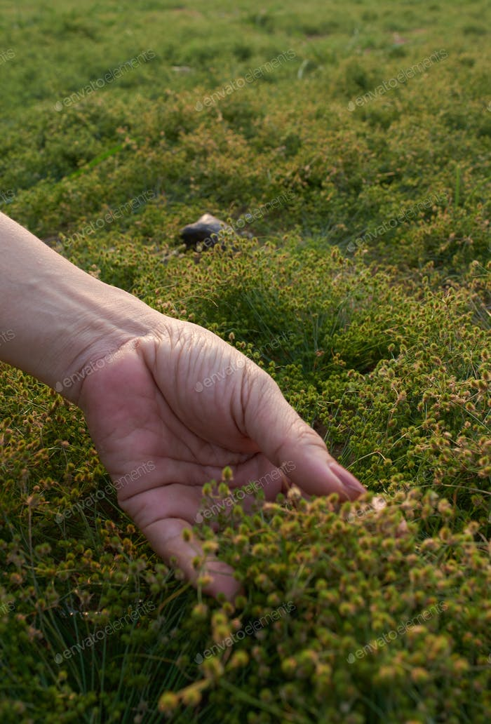 Woman hand and soft grass in nature