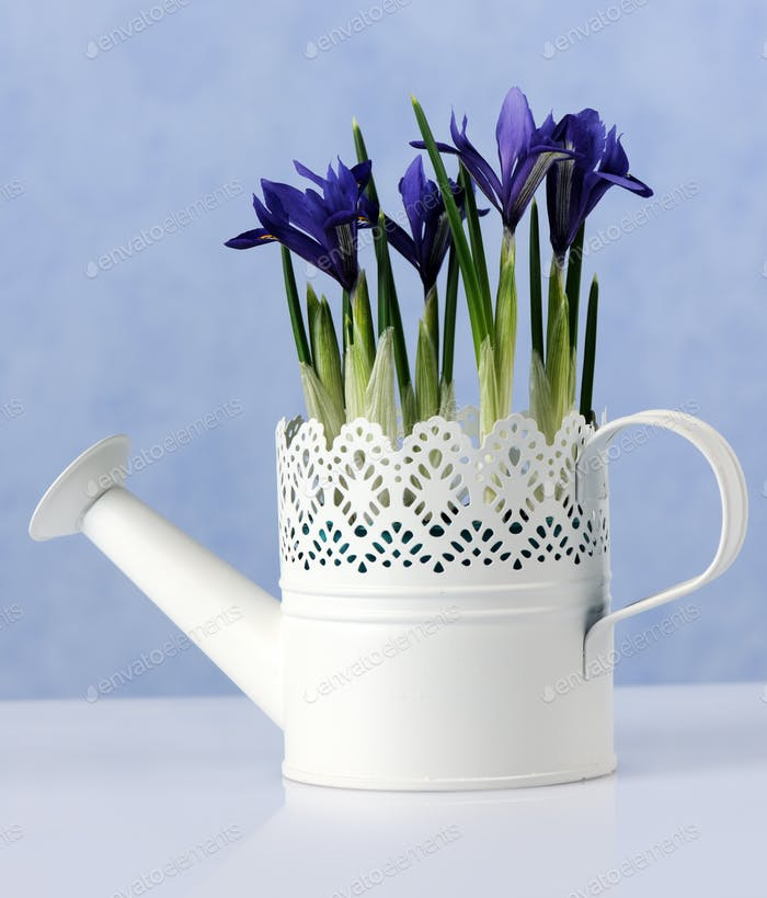 spring floral composition