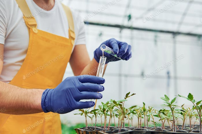 Holds test tube with water. Young greenhouse worker in yellow uniform have job inside of hothouse
