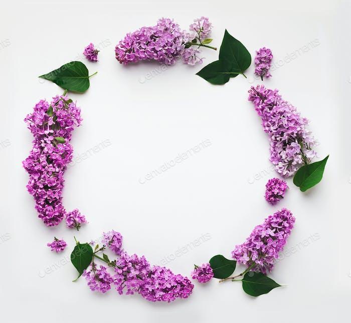 Lilac Flovers Rundrahmen, isoliert auf weiß, Draufsicht, flach gelegt