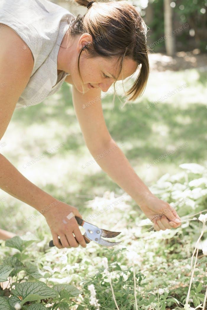 Frau Gartenarbeit, Schneiden weiße Blüten mit Gartenschere.