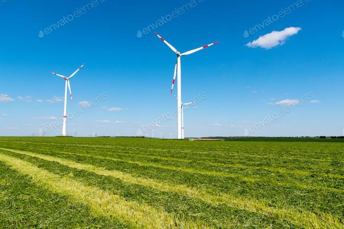 Ruedas de viento en un campo cortado