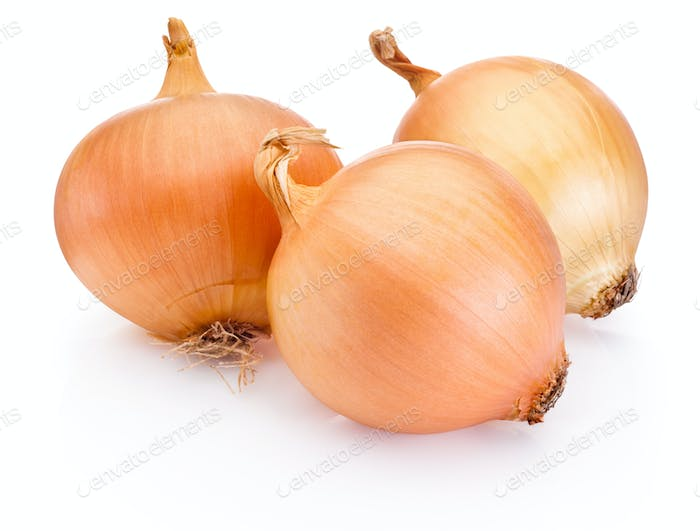 Three onion golden bulbs isolated on white background