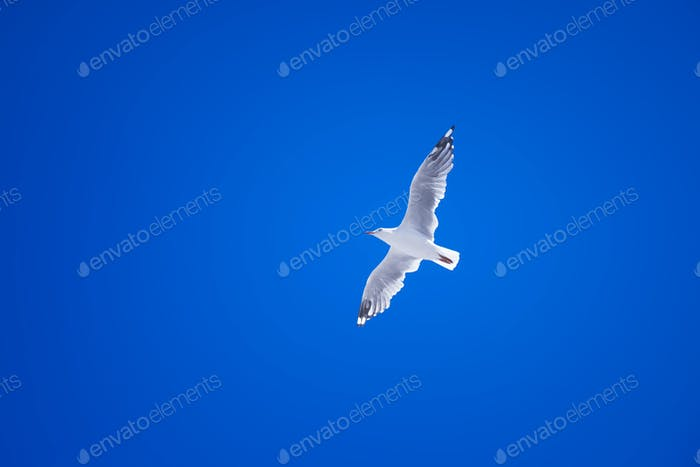 a seagull in the clear blue sky
