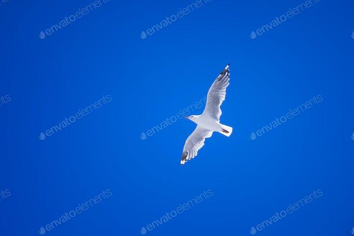eine Möwe im klaren blauen Himmel