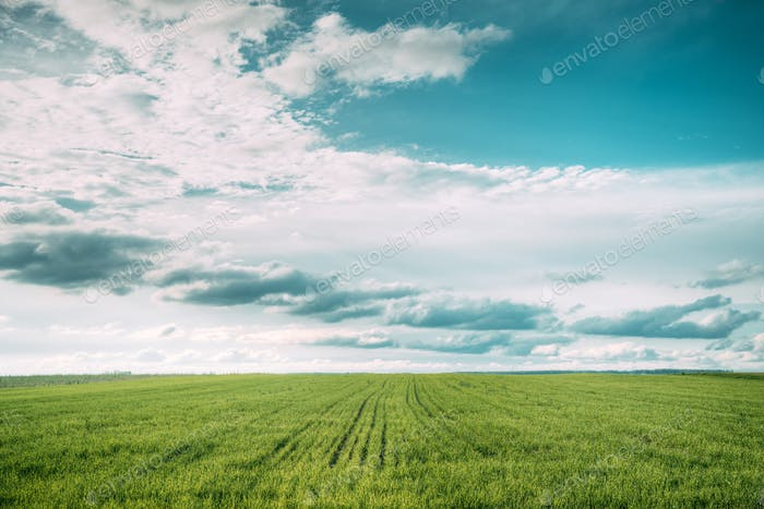 Countryside Rural Field Meadow Landscape In Summer Cloudy Day. S