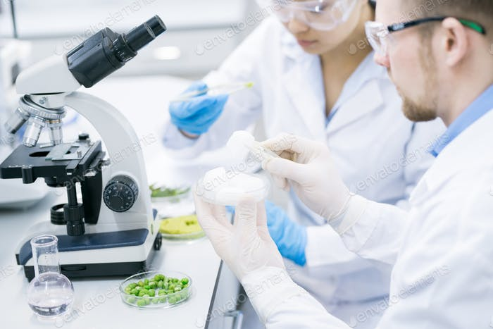 Microbiologists surveying properties of green vegetables