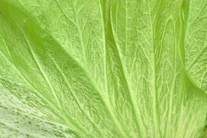 Flower Petal or Green Leaf Texture, Natural Background.