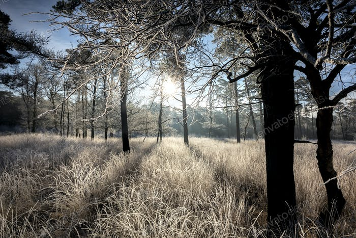 sunshine on frosted meadow and trees in frost