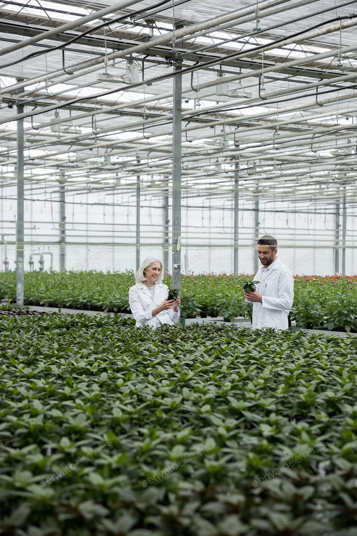 Bearded man standing in greenhouse with mature woman