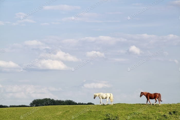 brown and white horses walk on pasture over sky