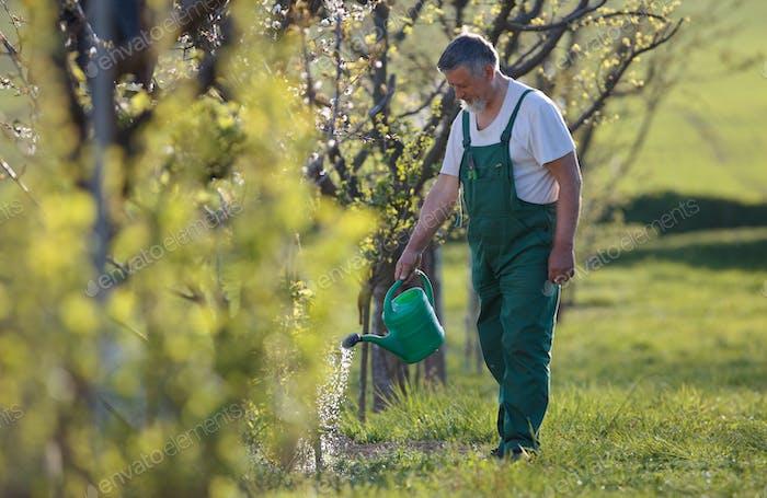 Thumbnail for Bewässerung Obstgarten/Garten - Porträt eines Seniorenmenschen Gartenarbeit in