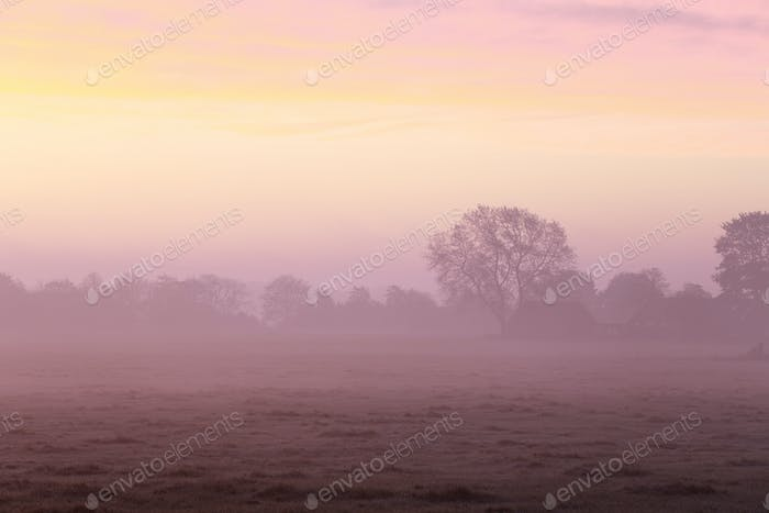 dramatic purple foggy sunrise in countryside