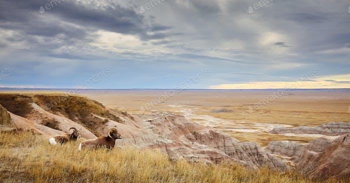 Badlands overlook.