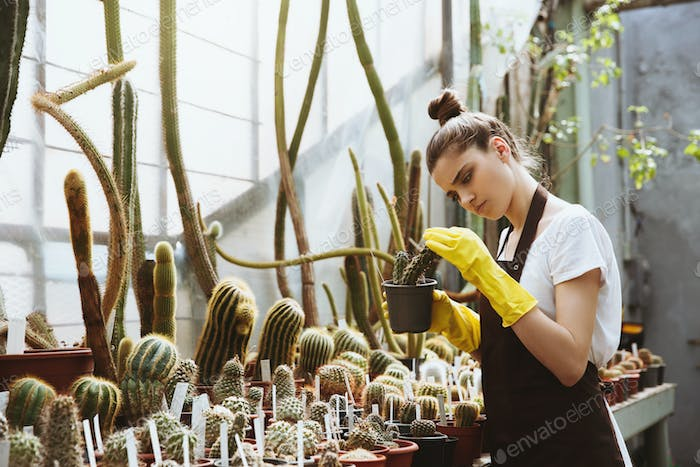Concentrated young woman standing in greenhouse holding plant