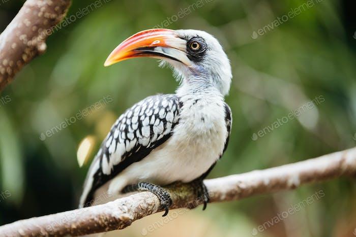 Yellow billed hornbill sitting on tree