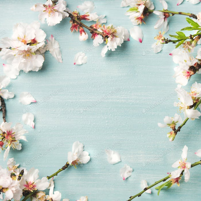 Spring almond blossom flowers over light blue background, square crop