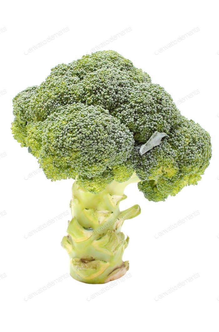 Frischer grüner Brokkoli auf weißem Hintergrund