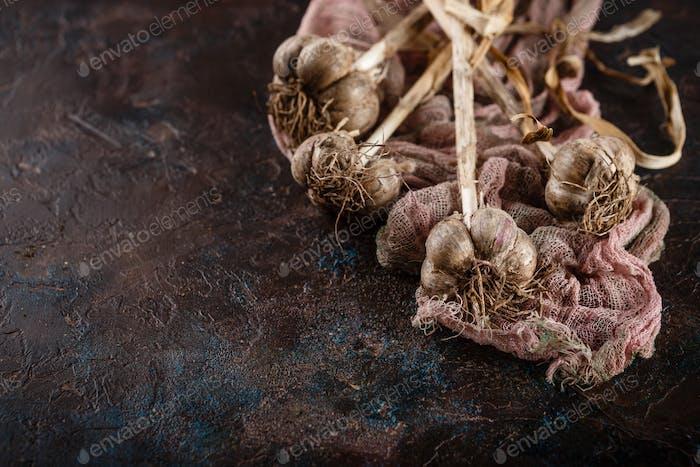 Garlic bunches on dark background