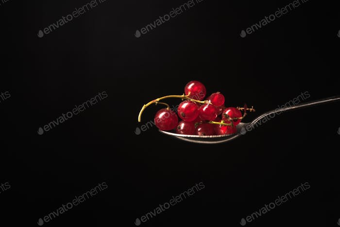 Currant isolated over black background.