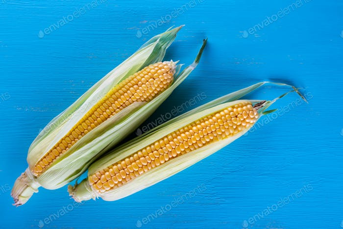 Ripe yellow corn on a blue table