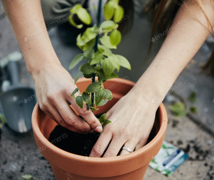 A person potting up a plant in a terracotta pot.