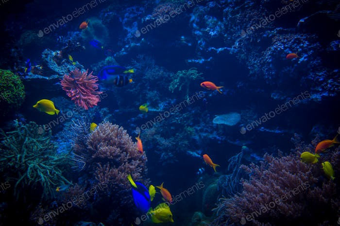 Tropical sea underwater with coral reefs and fish beautiful vie tropical fishes meet in blue coral reef sea water aquarium unde sciox Image collections