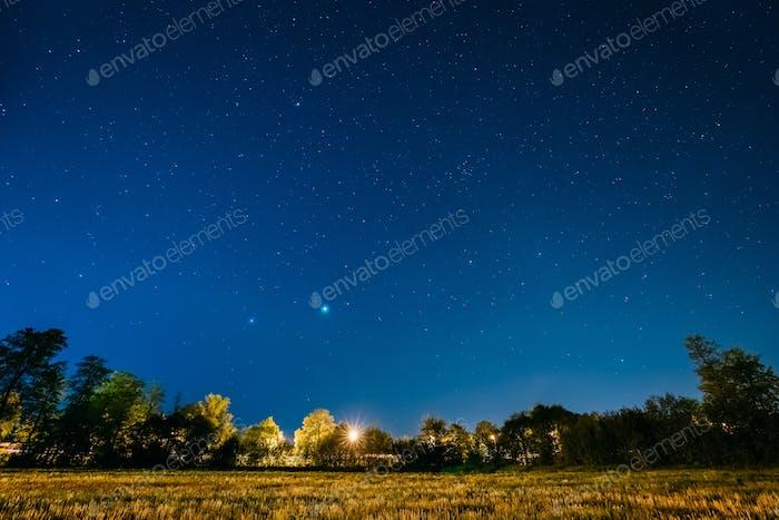 Green Trees Woods In Park Under Night Starry Sky. Night Landscap