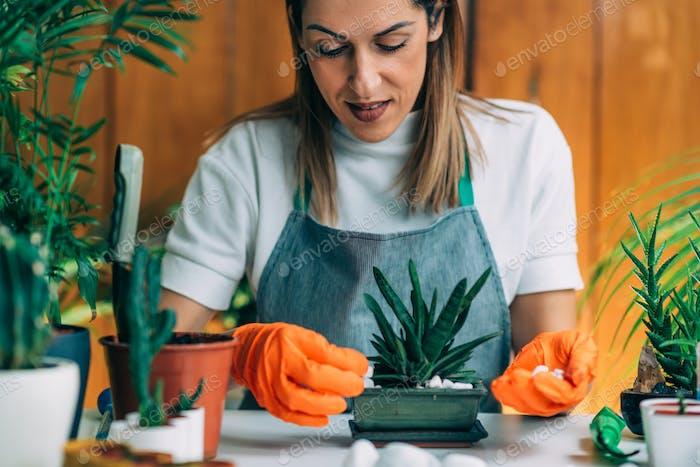 Indoor-Gartenarbeit, Beginnen eines Hausgartens