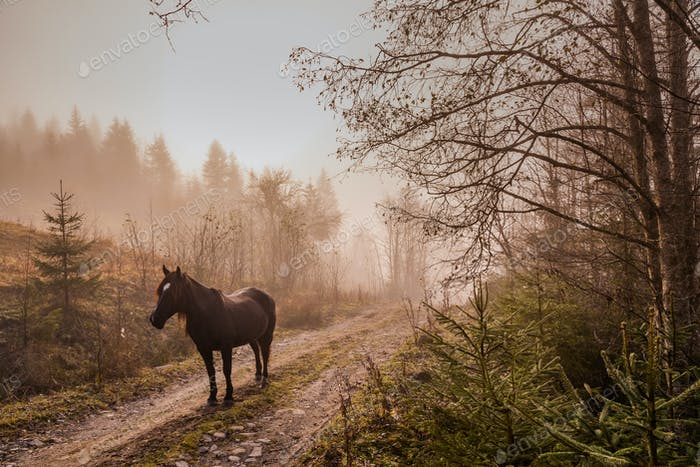 Beautiful horse in the mist at dawn in the mountains