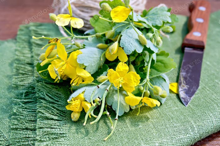 Celandine with knife on board