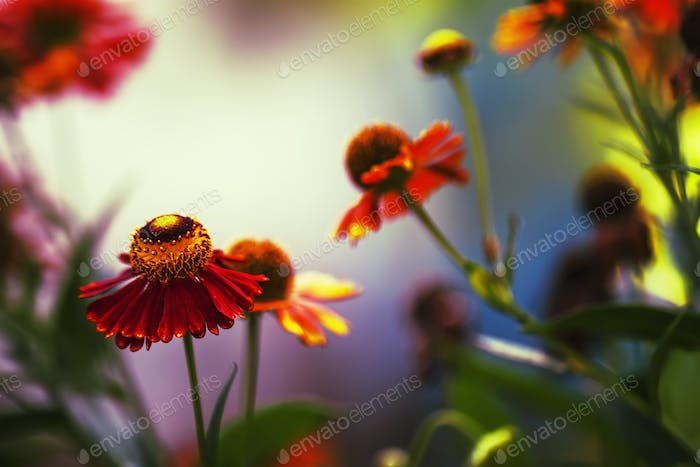 Red yellow flowers