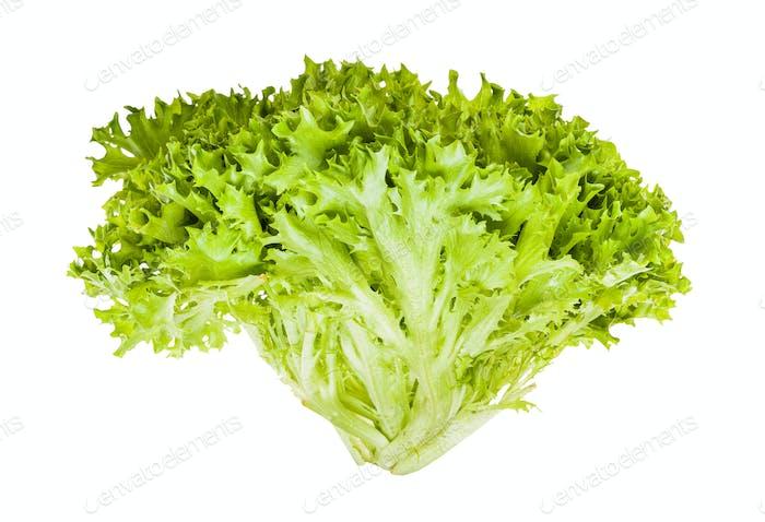 fresh green Ice leaf lettuce isolated on white