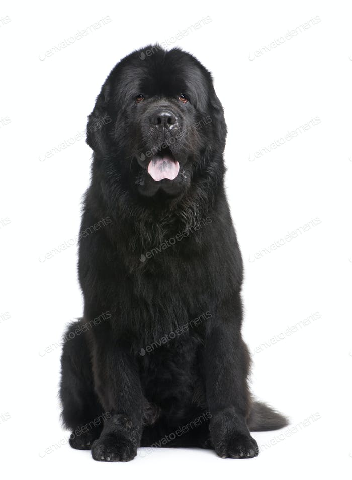 Newfoundland (3.5 years)