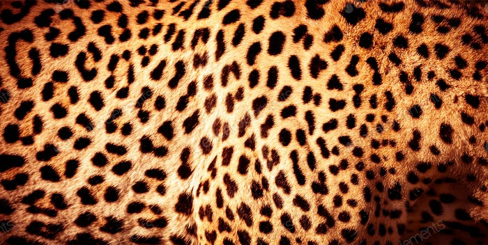 Beautiful leopard skin background