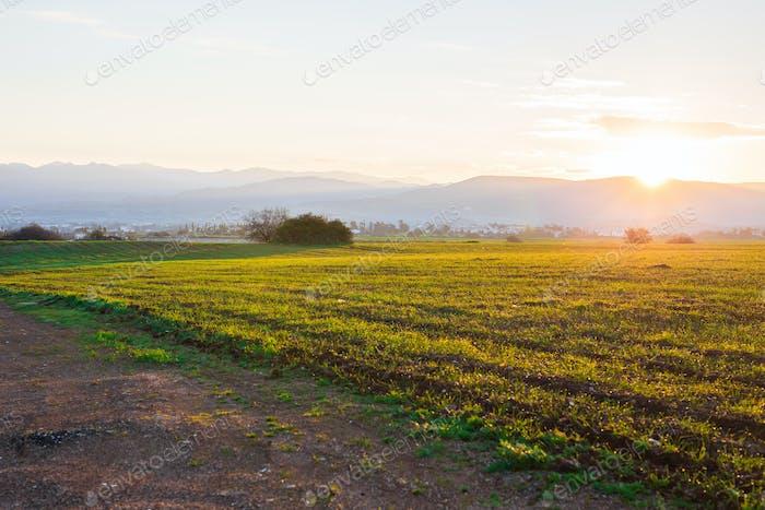 grünen ländlichen Feld am frühen Morgen