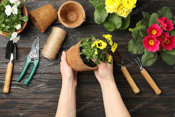 Frau hält Pot. Holzuntergrund mit Blumen und Gartengeräten, Draufsicht