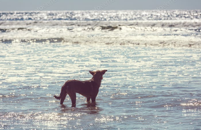 Dog on the beach