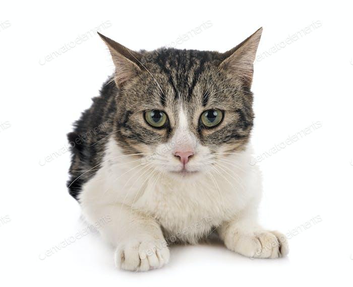 stray cat in studio