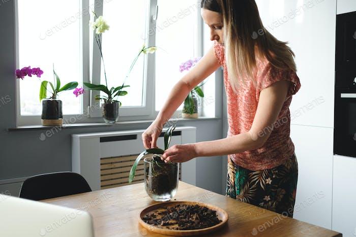 Frau Neubepflanzung Blume mit Online-Anweisungen auf dem Laptop