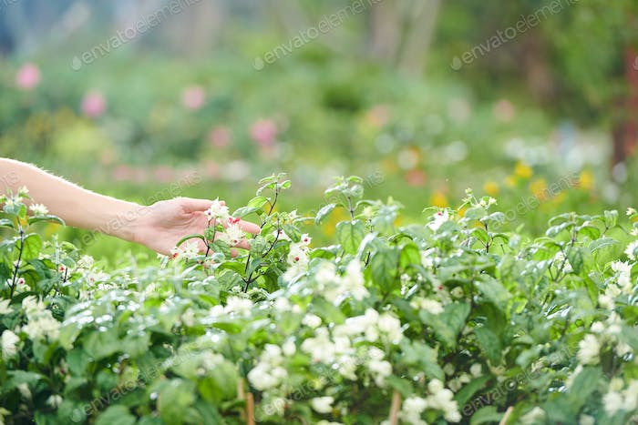 Farmer touching flowers