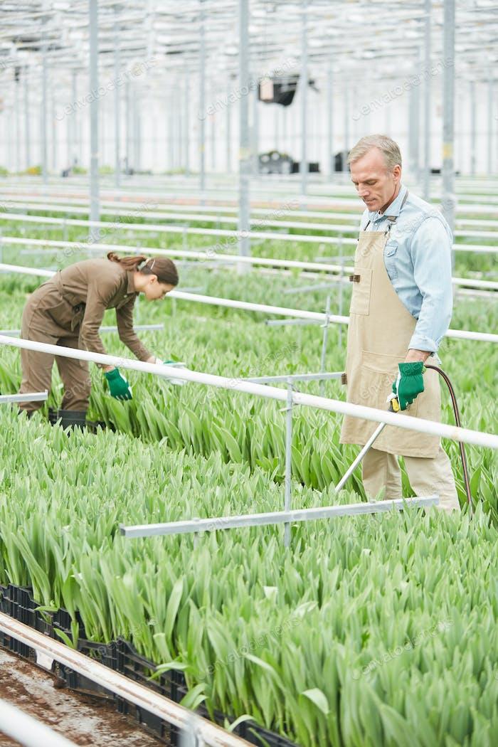 Arbeiter bei Flower Plantation