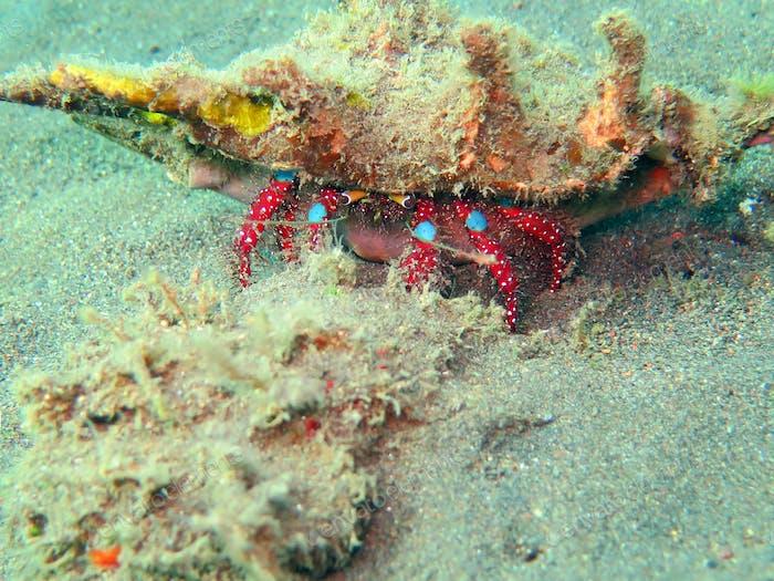 Gedeihendes Korallenriff lebendig mit Meereslebewesen und Fischschwärmen