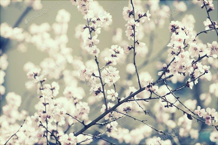 Frühlingsblüte - Retro-Stil Foto