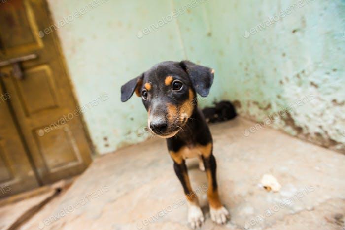 Puppies, India