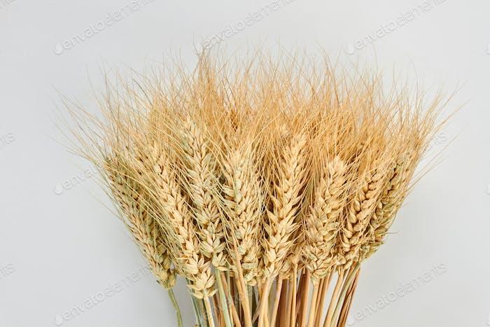 Sheaf of wheat ears on grey background.