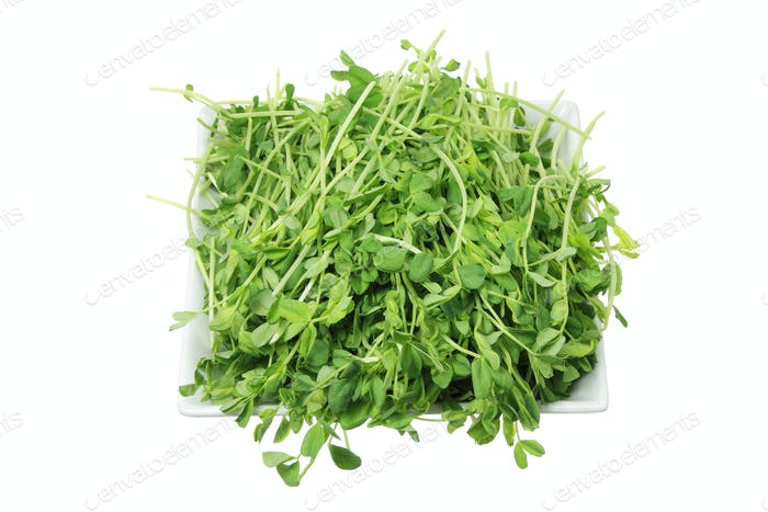 Snow Pea Sprouts